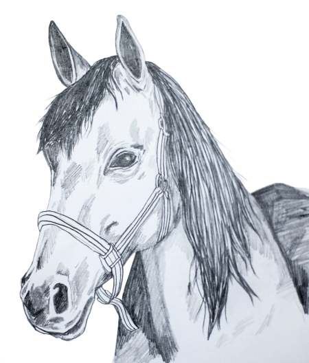 häst kopia
